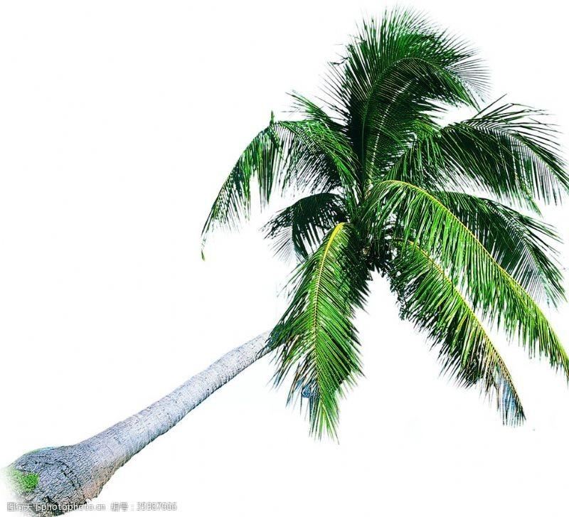 树椰树图片素材木材加工厂房防火设计规范图片