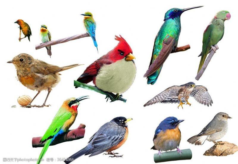 psd形態各異的鳥素材