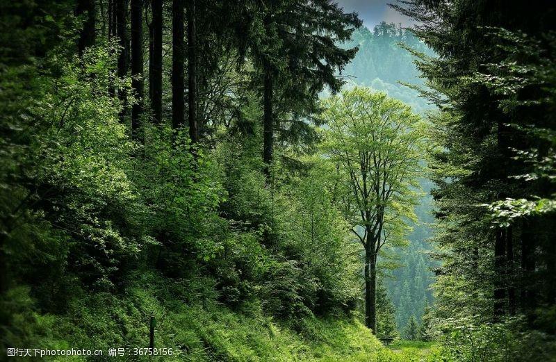 夏天森林樹林
