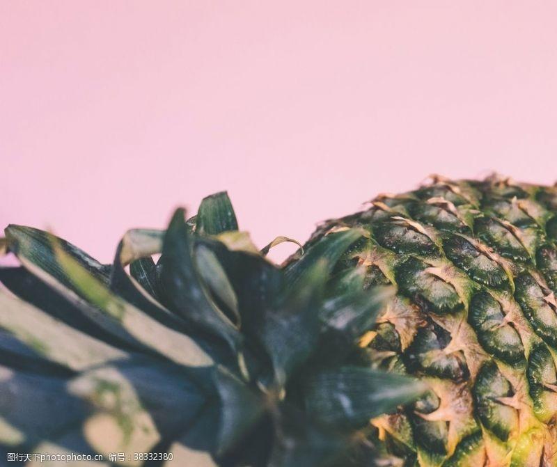 生物世界菠蘿