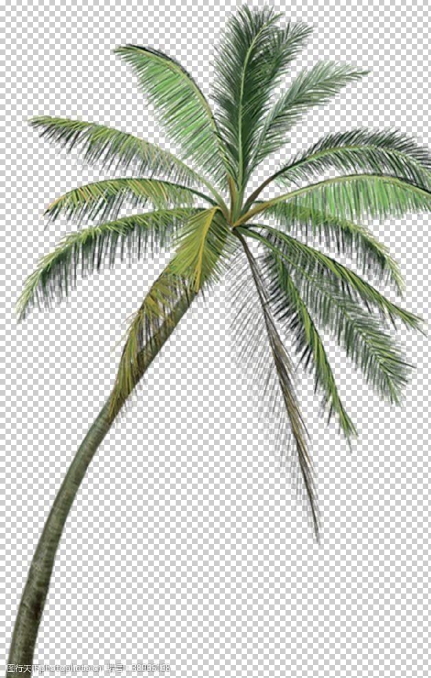 沙滩椰树图片素材文化海洋海报设计征集大赛图片