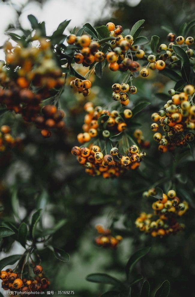 果园风光果树