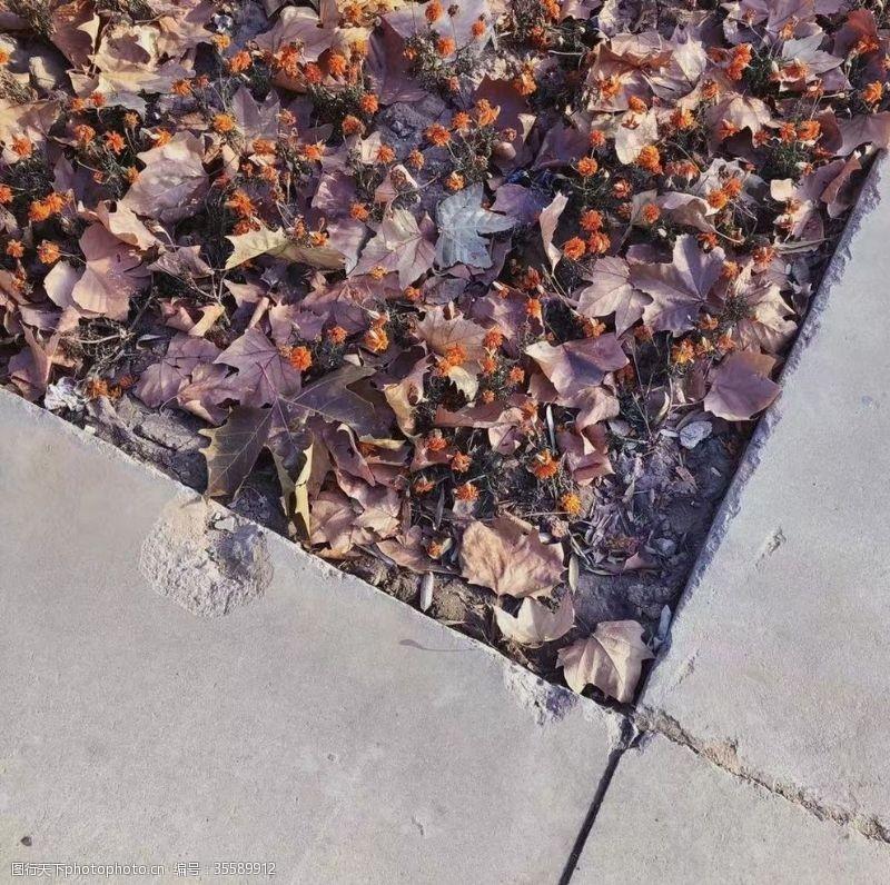 枯萎的花落满叶子的枯萎花丛