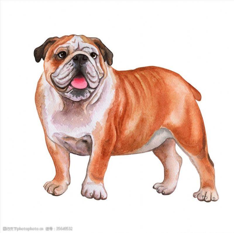 家宠小狗插画