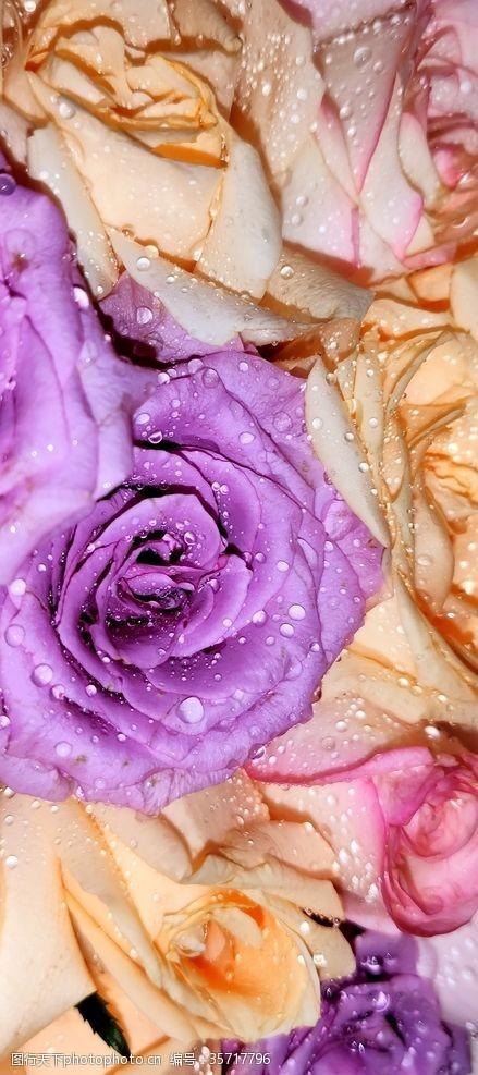 玫瑰花苞鲜花