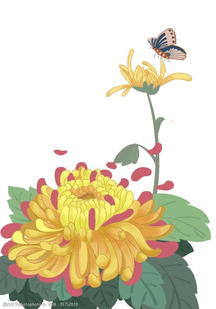寿客手绘菊花