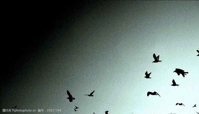 小鸟集合飞鸟剪影