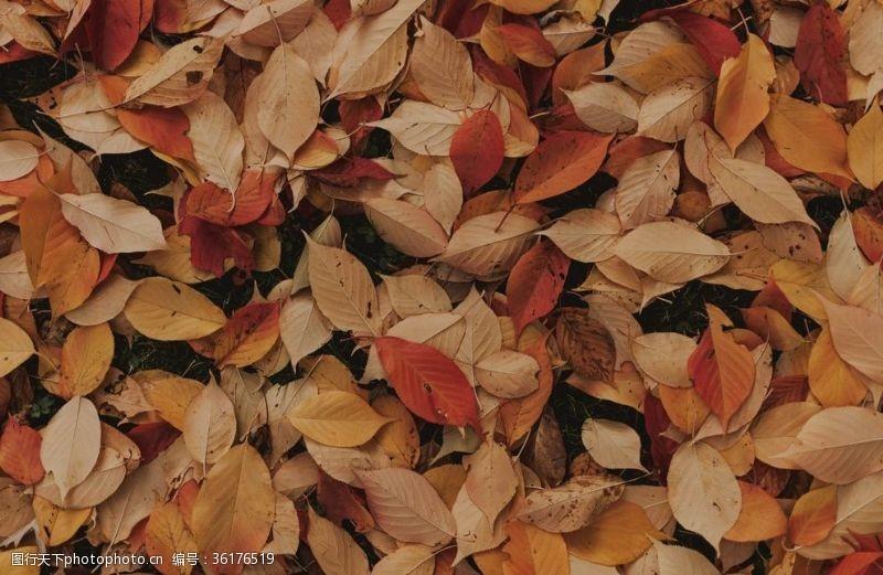 落叶背景设计