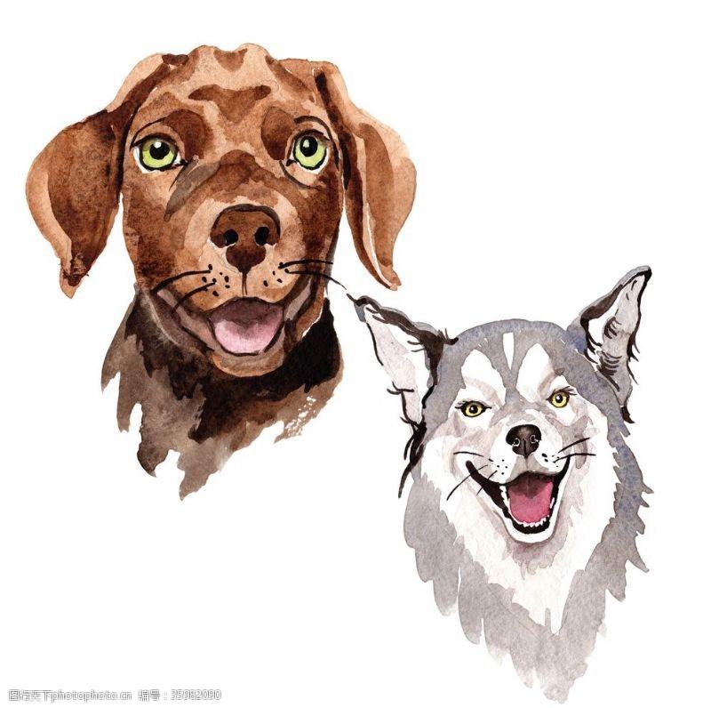 野狗手绘水彩狗