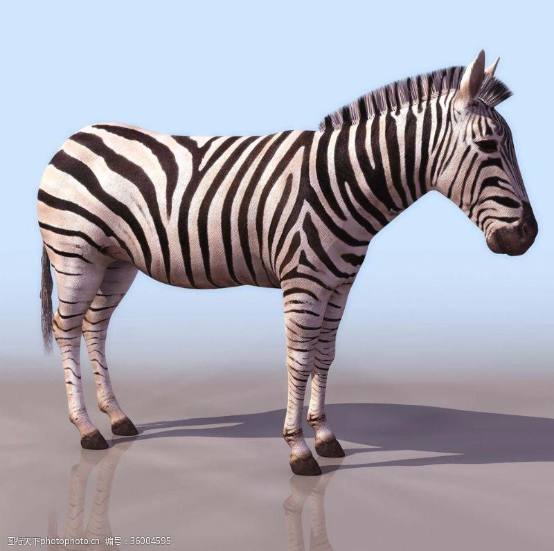 3d设计模型动物模型效果图