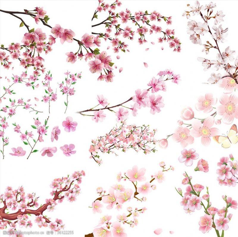 樱花主题樱花