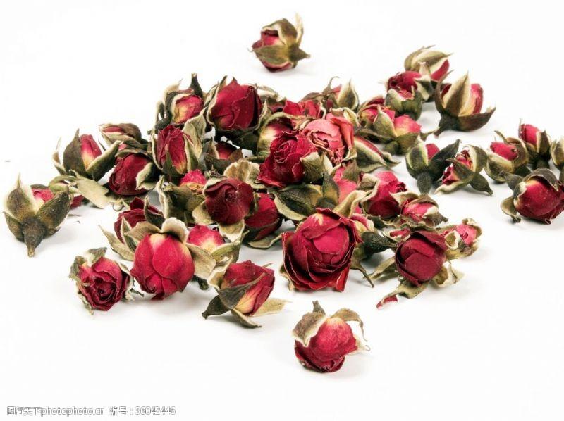 玫瑰花苞玫瑰花骨朵