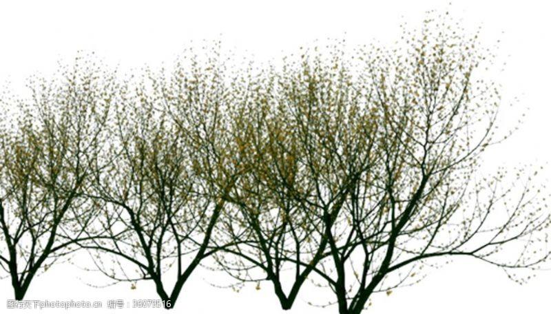 落叶树落叶植物