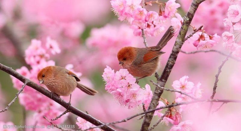树枝小鸟小鸟粉色花朵植物树枝