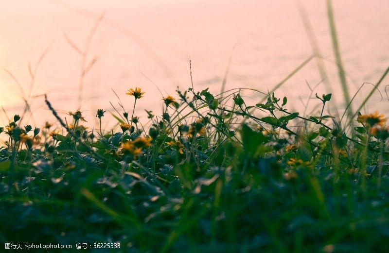 万绿丛中一点黄万绿丛中几点黄
