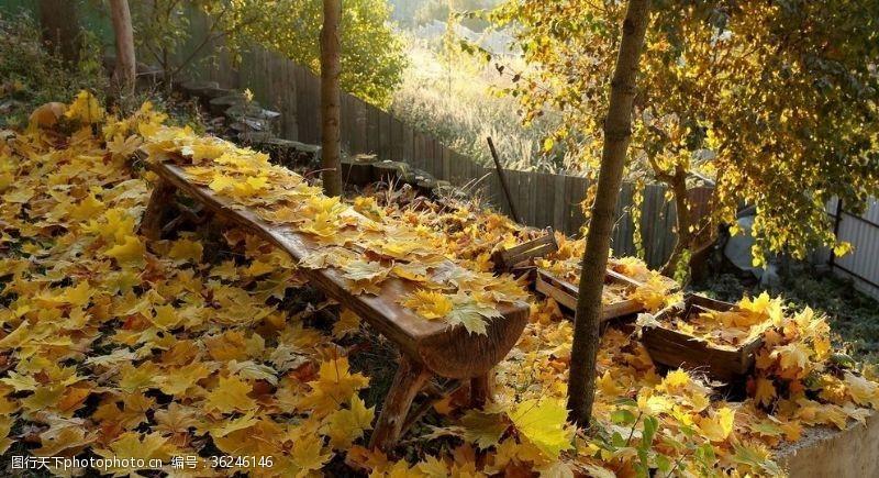 树林木桌落叶背景
