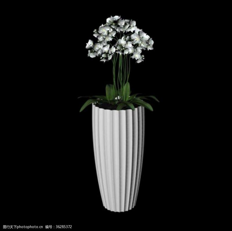花草模型植物模型花卉模型