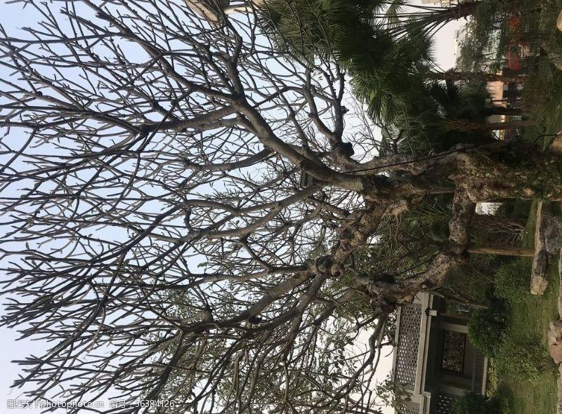 落叶树光树