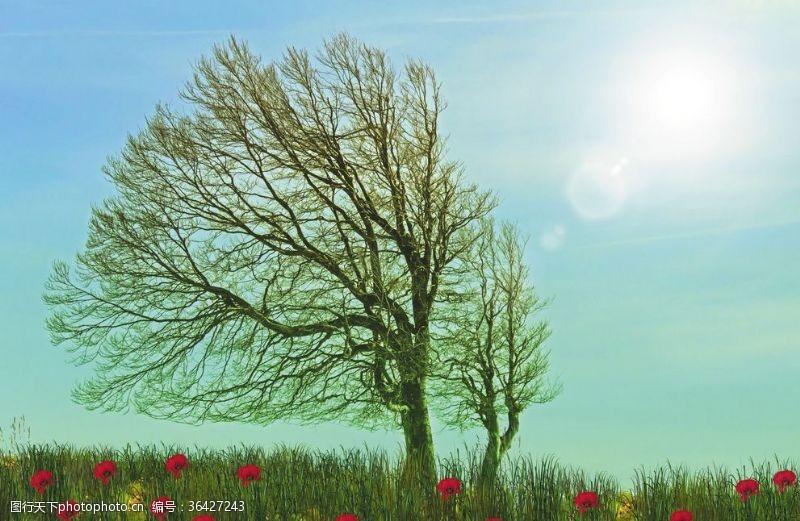 普拉多鲜花树太阳