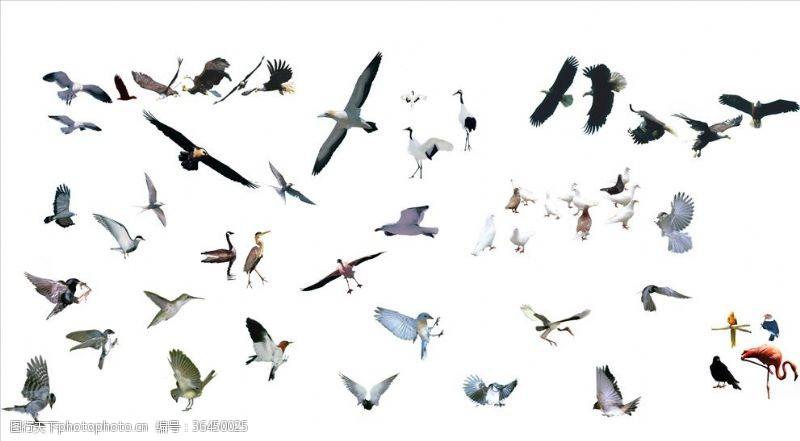 小鸟集合飞鸟鸽子