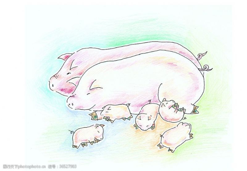 欢乐家庭小猪一家亲