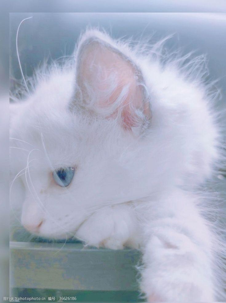 蓝眼睛蓝曦