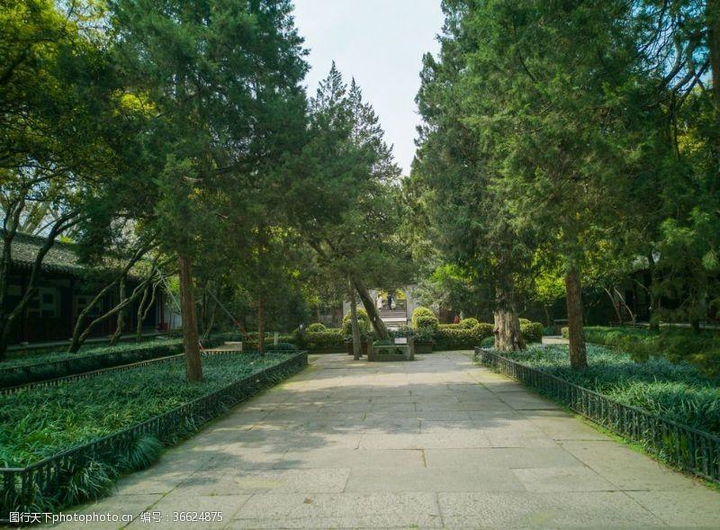 岳飞庭院里的大树