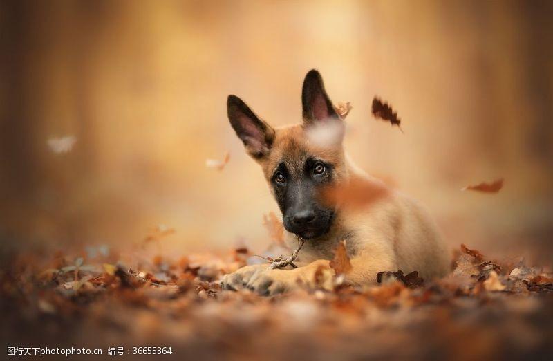 小狗宠物动物落叶背景