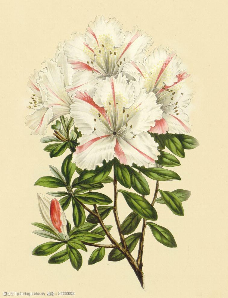梦幻花复古色调植物花朵绘画