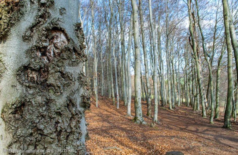 落叶树榉木森林