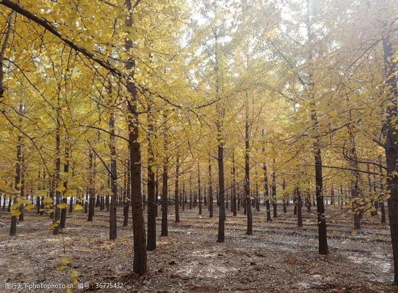 落叶背景树林