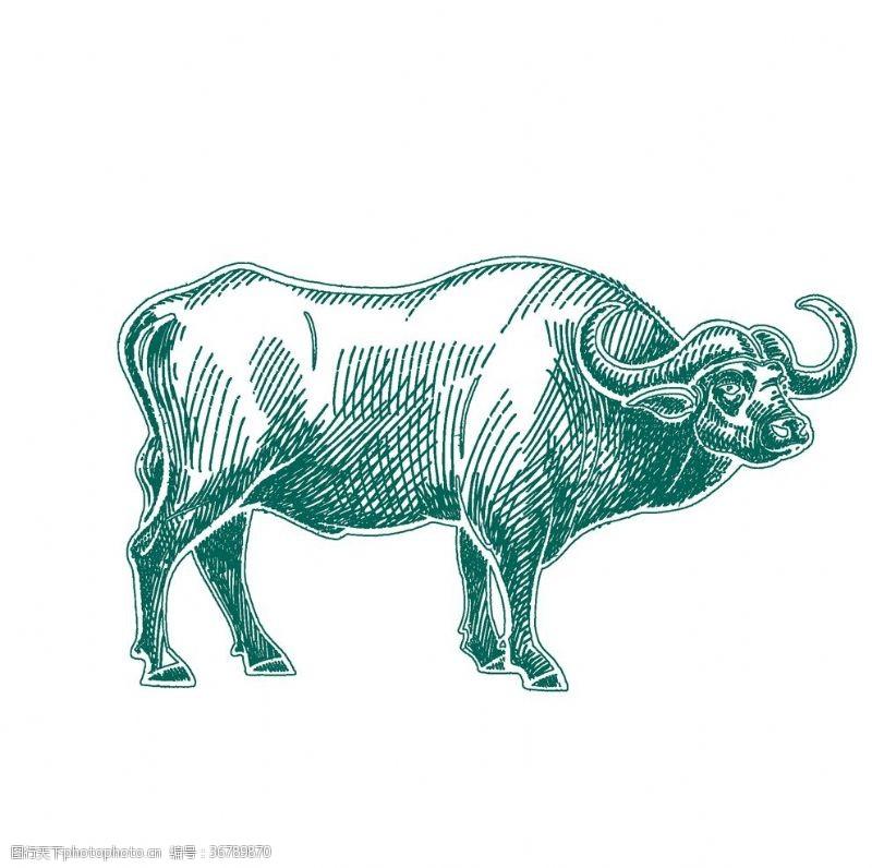 卡通斗牛水牛