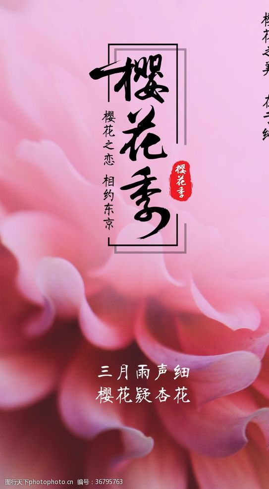 桃花季樱花季节