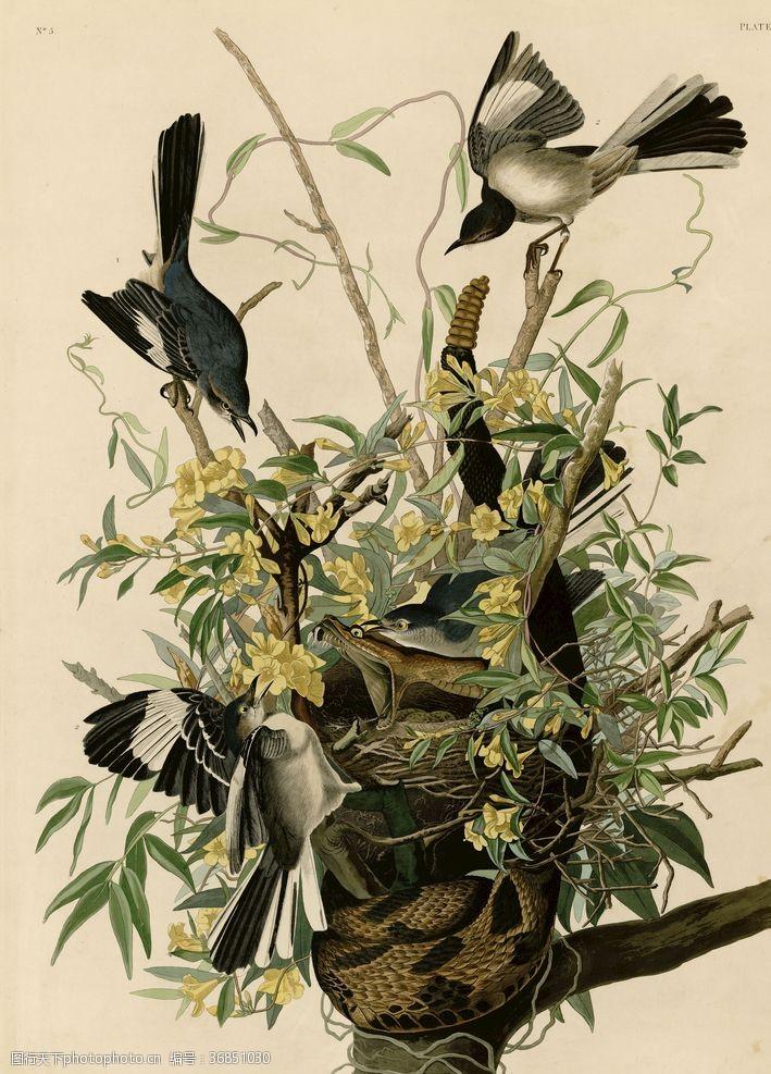树枝小鸟鸟窝嘲弄鸟