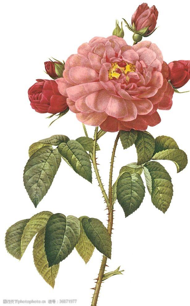 水果装饰画植物花卉油画装饰画