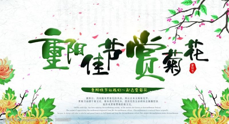 重九节重阳佳节赏菊花展板