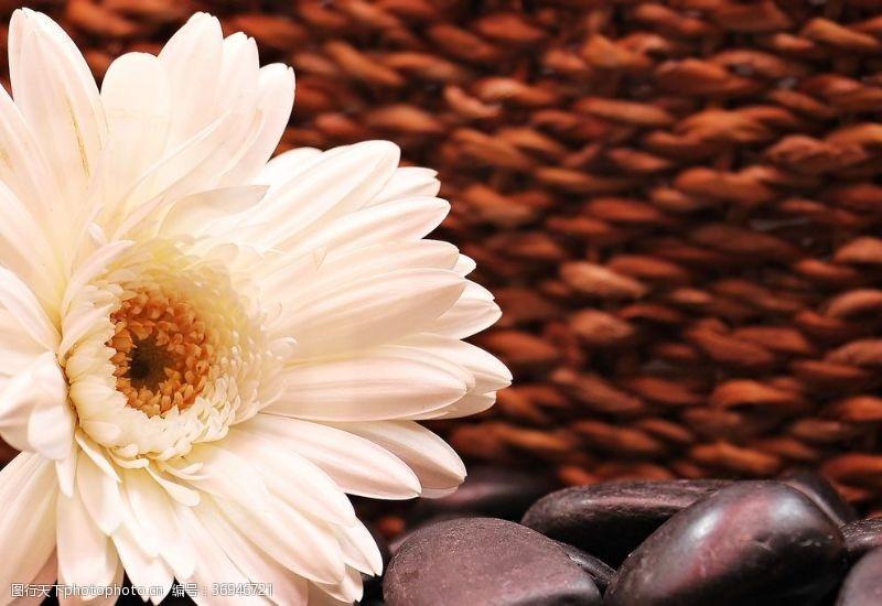 复合材料非洲菊