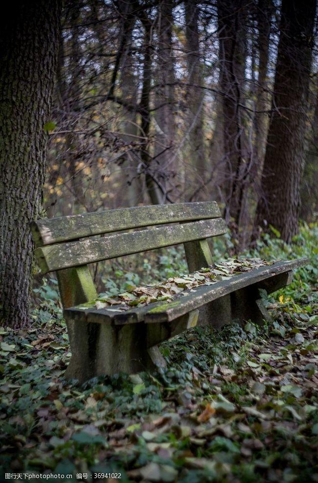 落叶背景森林