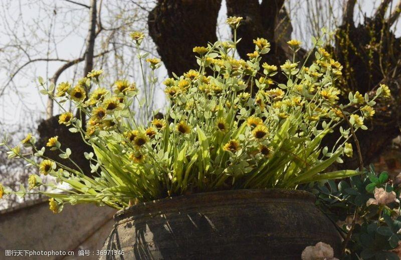 陶之艺堆心菊