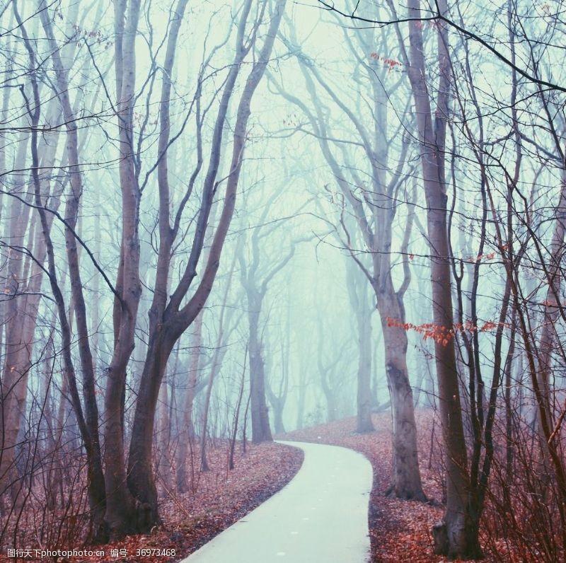 落叶背景风景