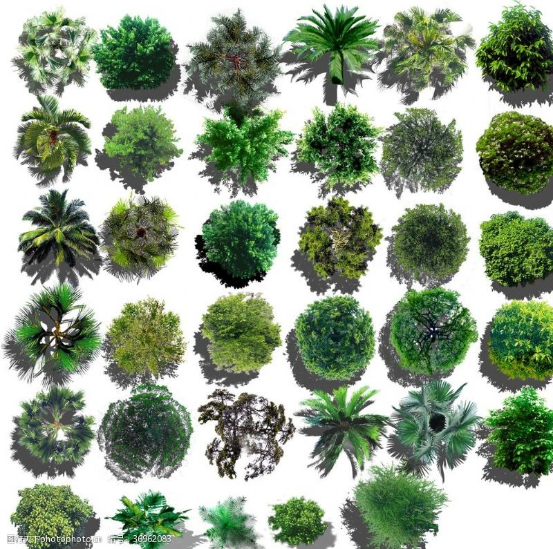 景观规划平面植物