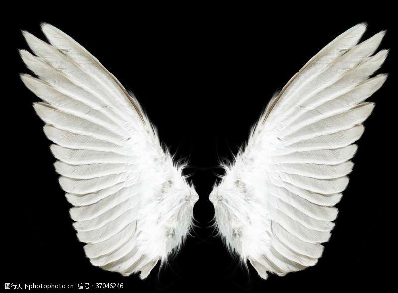 音乐翅膀天使翅膀