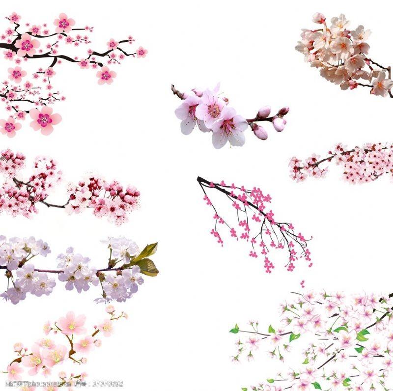 樱花图案樱花png