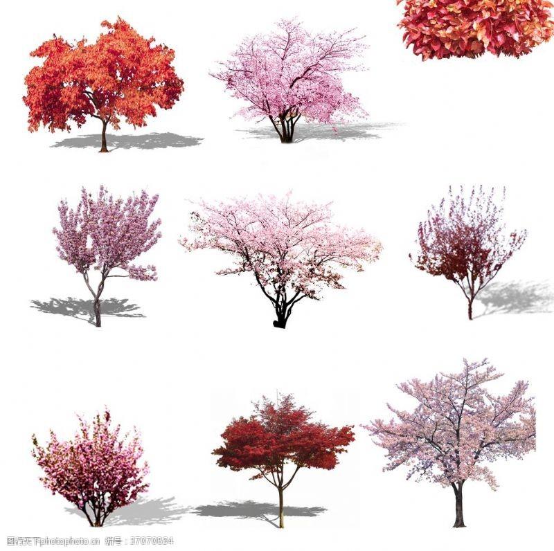 粉红色樱花樱花树png