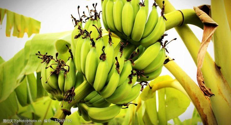 胡萝卜西红柿香蕉芭蕉美味