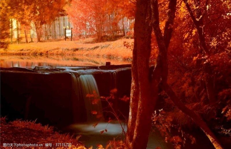 落叶背景金色落叶