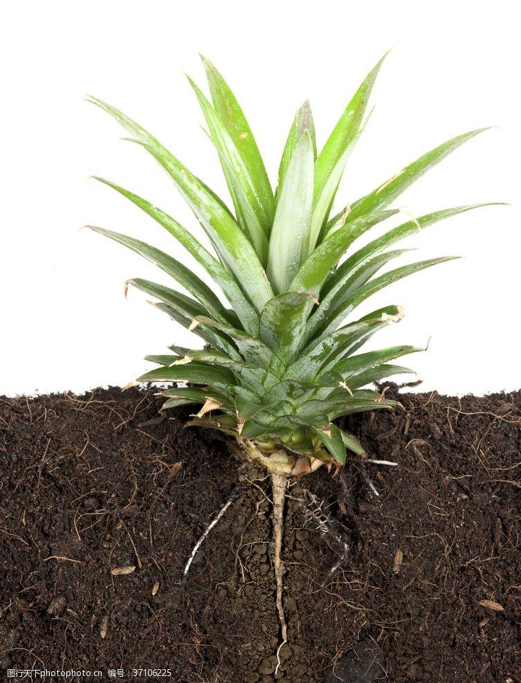 护肤美容养生绿色植物