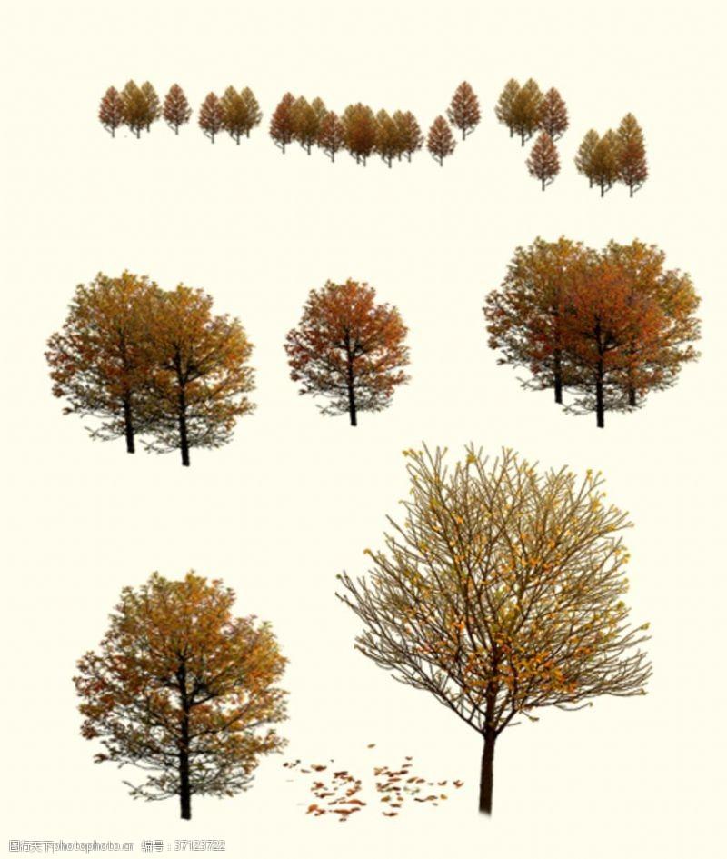 落叶树秋天树