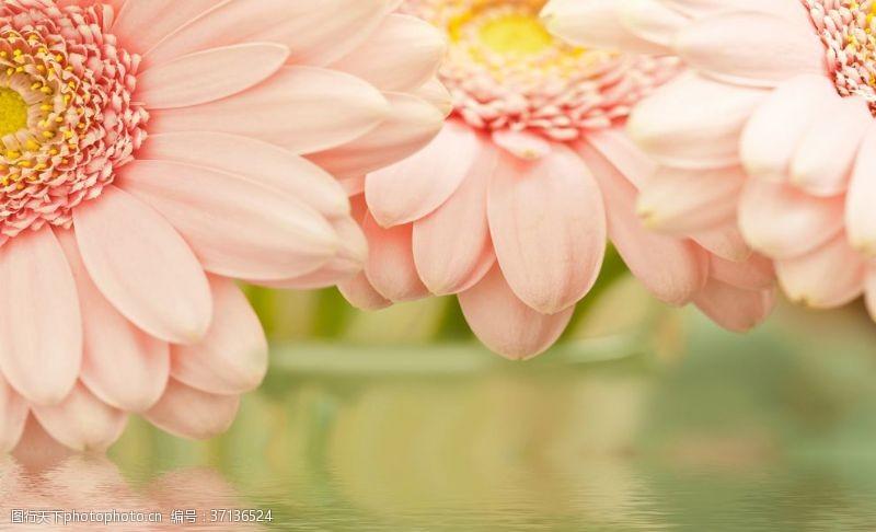 水面背景花朵