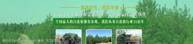 绿色网站banner